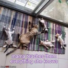 Clever Mama - LOLcats is the best place to find and submit funny cat memes and other silly cat materials to share with the world. We find the funny cats that make you LOL so that you don't have to. I Love Cats, Crazy Cats, Cool Cats, Funny Animal Pictures, Funny Animals, Cute Animals, Animal Pics, Random Pictures, Cute Kittens