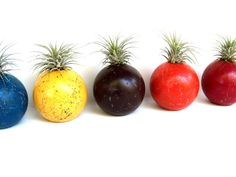 """Air Plant in Reclaimed Recycled Croquet Ball by airyobsessions, """"green"""" eco-friendly home decor ideas"""