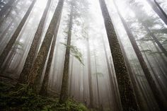 Hike through the beautiful, hazy forests at Olympic National Park, WA. | 12 Epic Winter Hikes We'd All Like To Take