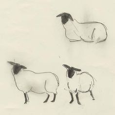 Drawing and Illusion: 2015 - Year of the Sheep