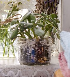 DIY! Create the most simple Mini Plant Jar in just 3 easy steps!