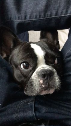 stellathefrenchiebebe on Instagram: Yum yum I love treats! 😋😋 . . . . . Yum yum I love treats! 😋😋 . . . . . #Frenchie #frenchieoftheday #frenchiesoverload #frenchielove… Rick James, Cute Puppy Videos, New Friends, Animals And Pets, Yum Yum, Cute Puppies, Boston Terrier, French Bulldog, Treats