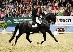 The horse of my dreams Moorlands Totilas