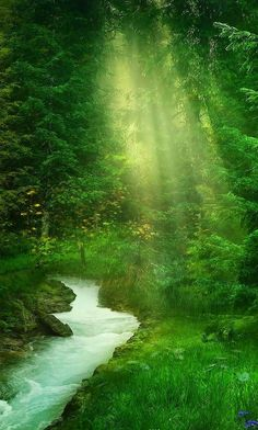 Beautiful Green Forest Photos Paysage, Trees Beautiful, Beautiful Forest, Beautiful Landscapes, Beautiful World, Beautiful Places, Beautiful Pictures, Simply Beautiful, Green Nature