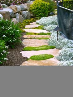 Paths that receive light traffic can be made of less heavy-duty materials, such as an informal series of field stones. This beautiful stone path, interspersed with Irish moss, rambles between large boulders and soft perennials.