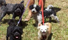 Day out at Schuster's Doggy Park, Elanora, Qld - Carol's Contented Critters, PetCare, Currumbin Waters, QLD, 4223 - TrueLocal