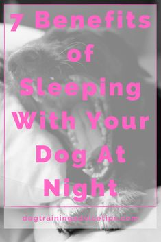 7 Benefits of Sleeping With Your Dog At Night. #dogtrainingadvicetips #dogcare #doghealth #dogtips #dogs Dog Facts, Dog Quotes, A Blessing, Little Dogs, Dog Care, Dog Training, Your Dog, Benefit, Sleep