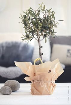 Deco With An Olive Tree Decorated Flower Pots Outdoor Plants Potted