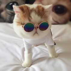 UV Sunglasses for Cats Fashion Cute Little Medium Small Breeds Animals Pet