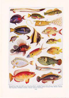 1947 Fish Print - Vintage Antique Home Decor Art Illustration for Framing. $10.00, via Etsy.