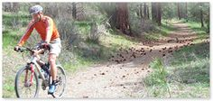 Over 40 Miles of Bike Trails throughout Echo Valley. Call 509-687-Tims (8467) or visit http://www.chelanrentals.com/reservations/ to reserve your Cabin.