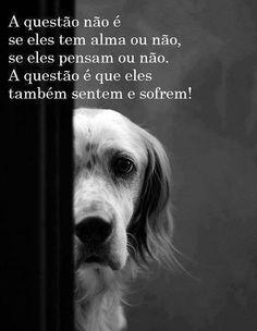 8 Melhores Imagens De Frases De Cachorros I Love Dogs Love Pet E