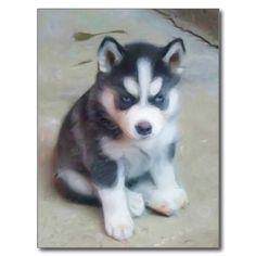 Siberian Husky puppy art postcard