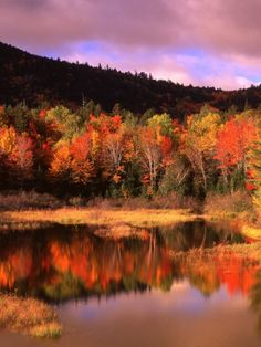 Small Pond and Fall Foliage Reflection, Katahdin Region, Maine, USA