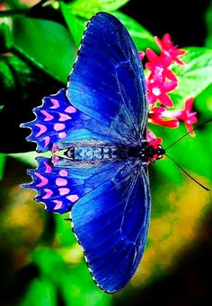 Types of Butterflies - Butterflies are one of the most adored insects for their enchanted beauty and representation of good luck and positive change. Butterfly Painting, Butterfly Wallpaper, Butterfly Flowers, Blue Butterfly, Butterfly Dragon, Monarch Butterfly, Butterfly Wings, Beautiful Creatures, Animals Beautiful