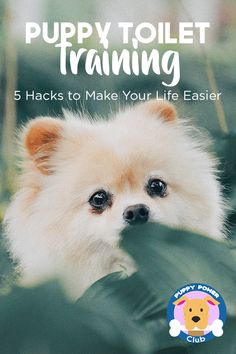 Puppy toilet training hacks than can help make your life easier. Check out these hacks on how to potty train your puppy to pee the right way.