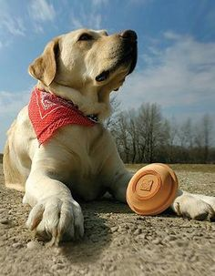 Enjoy hours of play time with your best friend with the innovative Winga Frisbee Dog Toy with Launcher; a fun, launch able toy capable of traveling up to 200ft.