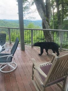 Throw an extra steak on the grill - this guy looks hungry!  From our deck at #LakeToxaway a few weeks back.
