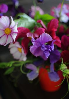 If you're looking for fragrant flowers to add to your garden, consider planting sweet peas. These annuals are easy to grow if you follow these guidelines.