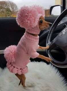 Dog sweater,dog clothes, dog clothes with hat,sweater set with pom poms,clothing for dog. Cute Bunny Pet Costume With Pom Pom Dog Hat Hundepullover Kleidung Hundekleidung mit Hut Set Funny Animal Memes, Cute Funny Animals, Cute Baby Animals, Funny Dogs, Animals And Pets, Funny Puppies, Fluffy Animals, Animal Humor, Dog Memes