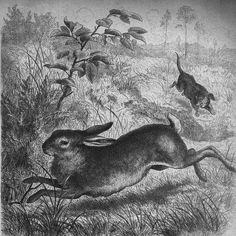 Dachshund and bunny