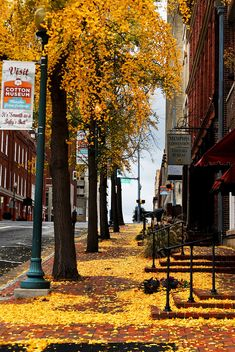 Fall leaves in downtown Memphis, Tennessee! One thing I miss from the South, the changing leaves!