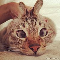 ARTistic Cat GIF • Cat prank. Funny Cabbit with tiny bunny ears and crossed eyes. Kitty is patient but not amused