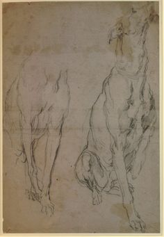Anthony van Dyck - Two studies of a greyhound, for the portrait of the Duke of Richmond    © The Trustees of the British Museum