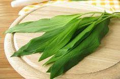 medvědí čenek-Allium ursinum čeleď-jednoděložné