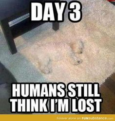 Check out: Animal Memes - Still lost. One of our funny daily memes selection. We add new funny memes everyday! Bookmark us today and enjoy some slapstick entertainment! Cute Animal Memes, Funny Animal Quotes, Animal Jokes, Funny Animal Pictures, Cute Funny Animals, Funny Cute, Animal Captions, Dog Quotes, Funny Photos