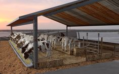 Farm House with Cows Cow Shed Design, Shed Design Plans, Cow House, Farm House, Goat Shelter, Cattle Barn, Horse Barn Designs, House 3d Model, Farm Shed