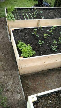 Vyvýšené záhony - foto návod – Z mojí kuchyně Vegetable Garden, Gardening Tips, Vegetables, Plants, Diy, Outdoor, Decor, Garden, Hothouse