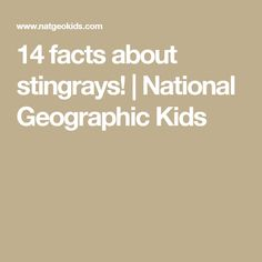 14 facts about stingrays! | National Geographic Kids