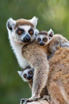 Dia de BICHOS! 20 Fotos de animais