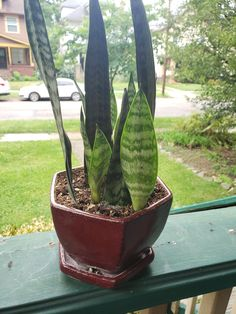 Snake Plant Care – Em Anderson Writing...