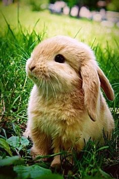 Oh hai. Us bunnies can communicate with our humans. We haves a very complicated language. To find out what we are saying to you, go to http://language.rabbitspeak.com. I ams serious! 'k, bye.