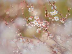 Photograph let us bloom by Miyako Koumura on 500px