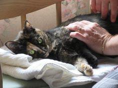 Karen Rose Smith's Blog: Building #Feline #Trust--#Cats This Week by Karen Rose Smith