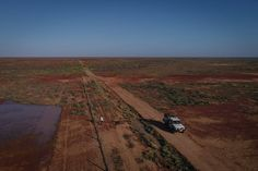 Mending Fences in the War Between Dingoes and Sheep