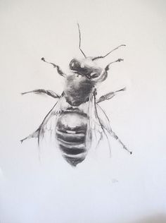 Buzz Bee drawing by Calla Beddow