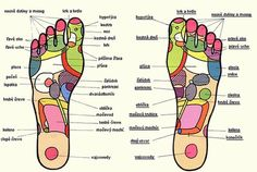 Reflexology points on the feet! This chart will come in handy in knowing where to place the oils! Ear Reflexology, Reflexology Points, Essential Oil Uses, Doterra Essential Oils, Foot Chart, Healing Herbs, Natural Healing, Young Living Oils, Oils For Skin