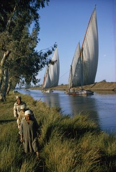 Roped like tow horses, men pull limp-sailed boats along a canal. Nile delta, Egypt