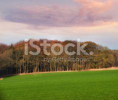 Autumn colors royalt