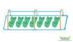Cómo hacer un invernadero de tubos pvc - Semillas Orgánicas y semillas raras
