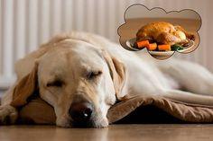 Aprenda a fazer uma alimentação caseira para cães. Dicas da veterinária sobre principais ingredientes da dieta básica, quantidades, modo de preparo do alimento do cachorro.