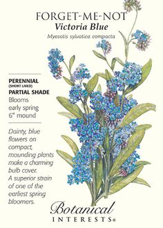Perennial (short lived) or Biennial in USDA zones 4-9. If you're looking for a shade plant, this is it! A darling, small, compact variety, Victoria Blue's eye-catching, petite, star-shaped flowers are