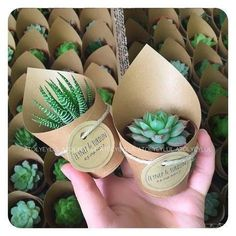 Planter wedding giveaways - #giveaways #planter #wedding
