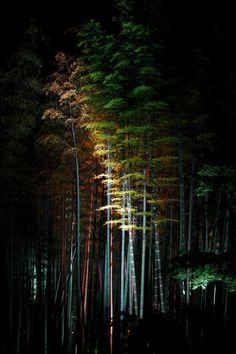Bamboo Forest, Kodaiji Zen Temple, Kyoto, Japan.