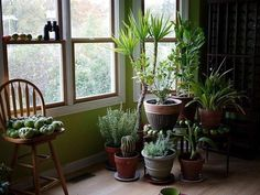 What to feed indoor plants? / Culinary Universe