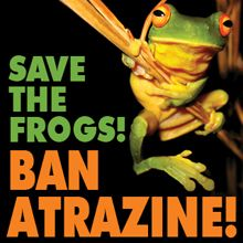 Follow link to sign petition to help ban Atrazine. It is one of the world's most common pesticides: over 80 million pounds of it were used on American crops last year, and it has been in use for 50 years. This harmful pesticide is an endocrine disruptor that can turn male frogs into females at concentrations as low as 2.5 parts per billion. Atrazine causes cancer in laboratory mammals. Atrazine is one of the most commonly detected pesticides in rainwater, groundwater and tapwater in the USA.